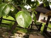 drevenica brundzovce