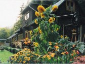 chata u bacu jana na orav vratna dolina
