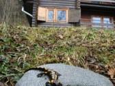 Chata SOVA na Táloch - Bystrá - BR #39