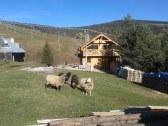 Chata Bachledová dolina - Ždiar - PP #13