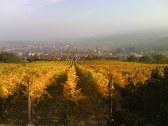Villa VINICA - Limbach #25