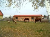 ranc arkadia
