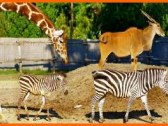 Zoo Jána Xantusa - Gyor