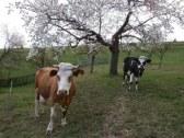 Farma pod Melichovou skalou - Detva #47