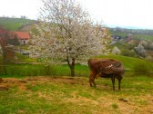 Farma pod Melichovou skalou - Detva #49