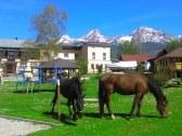 monty ranch