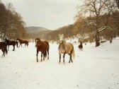 monty ranc