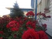 Hotel REMY - Bratislava #9