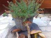 Chata EVA na Bezovci - Stará Lehota #34