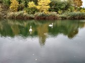 jazero s labuťami