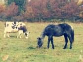 Farma pod Melichovou skalou - Detva #52