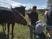Kŕmenie koní na blízkej farme