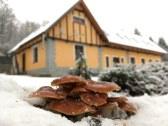 Aj v zime rastú unás huby