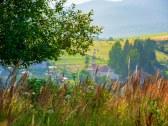 Domček Lehotianka v Nízkych Tatrách - Horná Lehota - BR #25