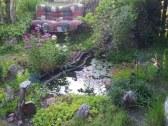 Jazierko s rybkami