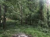 chalupka v horach